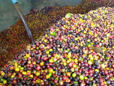 O zpracování kávy obecně