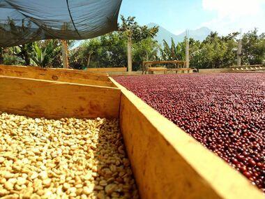Mokré zpracování kávy