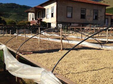 Suché zpracování kávy