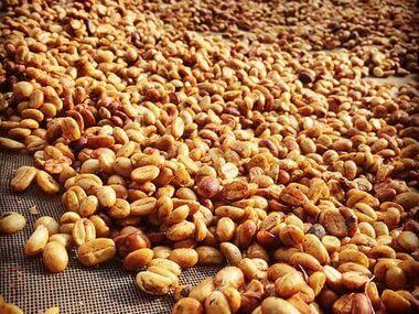 Honey metoda zpracování kávy