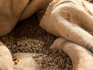 Odrůdy kávovníku arabica