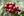 Typica Arabica